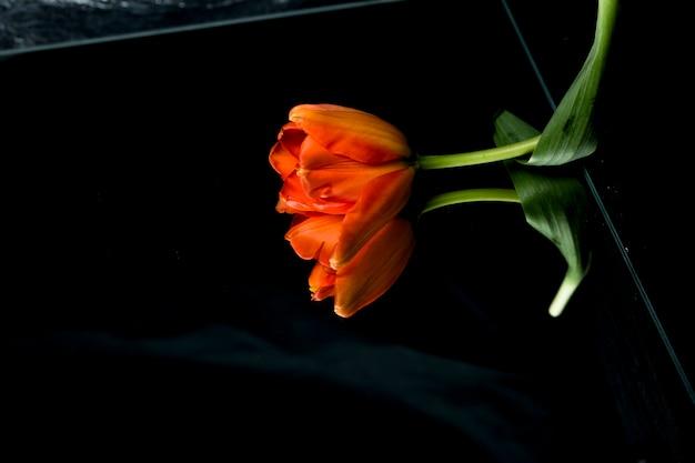 Punto di vista dell'angolo alto del tulipano arancio su vetro con la riflessione Foto Gratuite