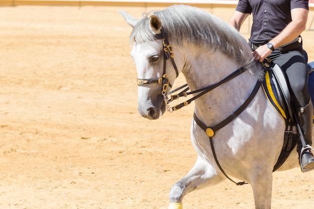 Pura corsa di cavalli docile e obbediente Foto Premium
