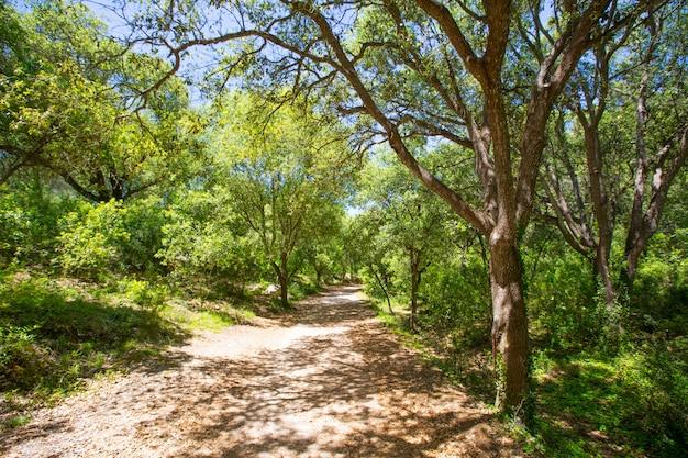 Querce della foresta di minorca a cala en turqueta ciudadela Foto Premium