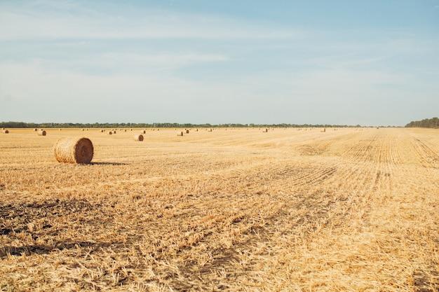 Raccolta di grano nel campo soleggiato e rurale raccolta di stagione autunnale Foto Premium