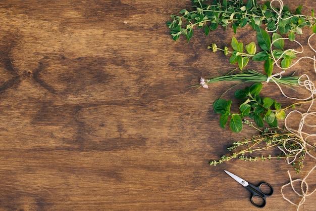 Raccolta di ramoscelli di piante verdi vicino a forbici Foto Gratuite
