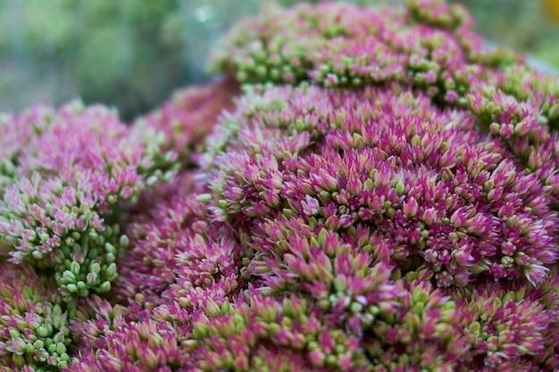 Radura con il piccolo fondo della natura dei fiori di rosa Foto Premium