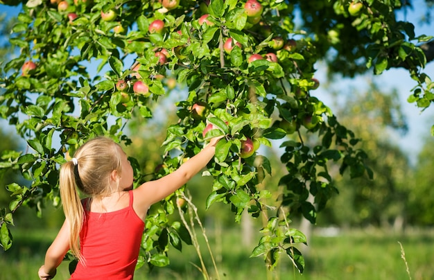 Ragazza bionda raccolta mele Foto Premium