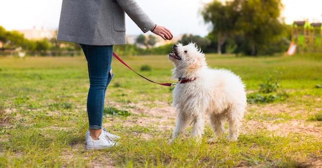 Ragazza che cammina con il suo cane in un parco Foto Premium