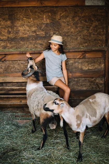 Ragazza che si siede nel granaio che alimenta le pecore Foto Gratuite