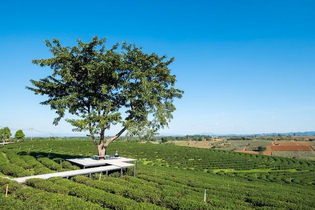 Ragazza sotto il grande albero nel campo del tè Foto Gratuite