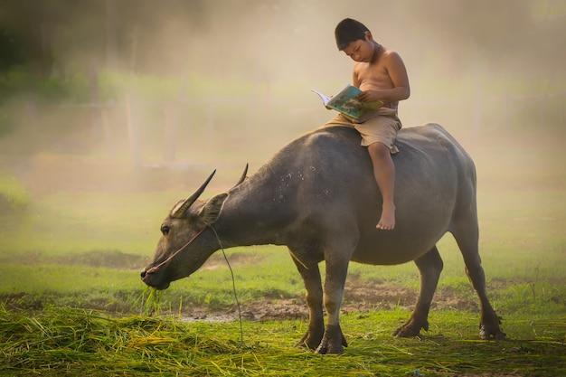 Ragazzi che cavalcano bufali e leggono un libro per l'educazione. Foto Premium