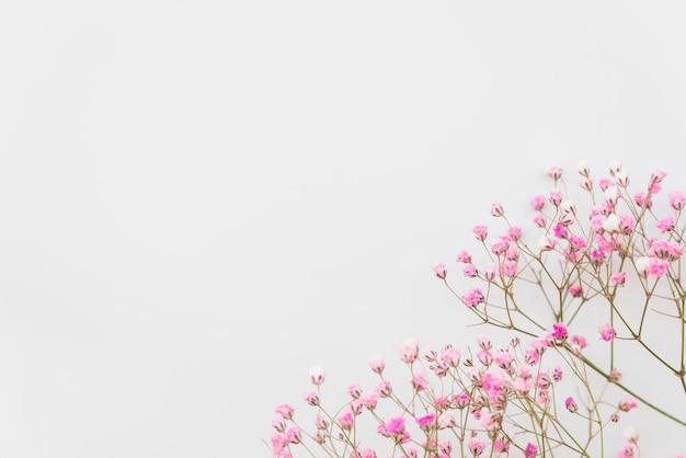 Rami di fiori rosa freschi Foto Gratuite