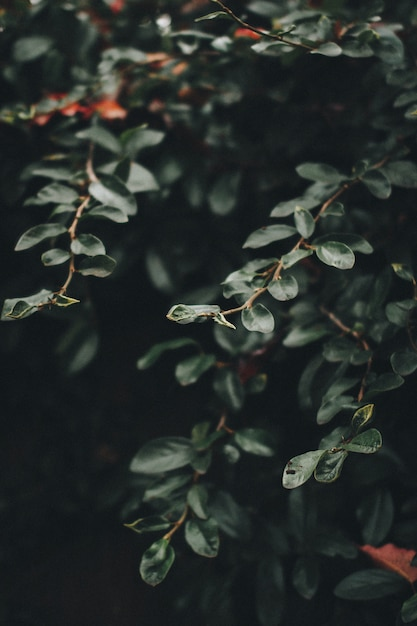 Rami e foglie verdi di una grande pianta Foto Gratuite