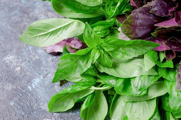 Ramo basilico verde e rosso su grigio scuro Foto Premium