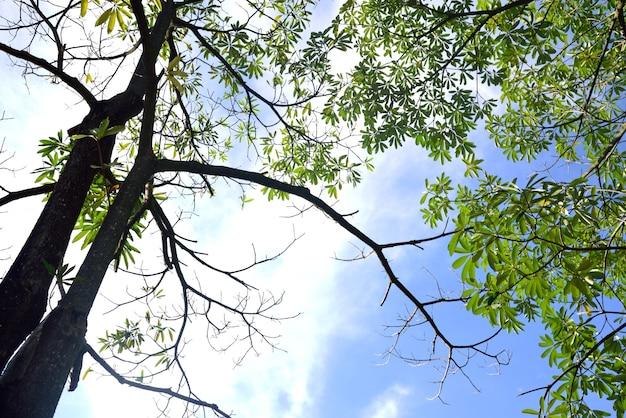 Ramo di un albero sullo sfondo del cielo blu Foto Premium