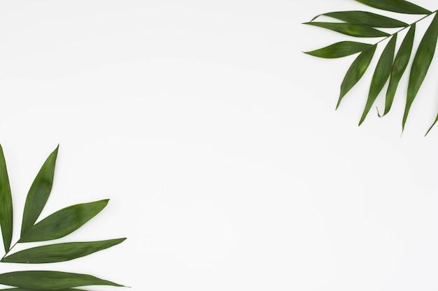 Ramoscello delle foglie all'angolo di fondo bianco Foto Gratuite