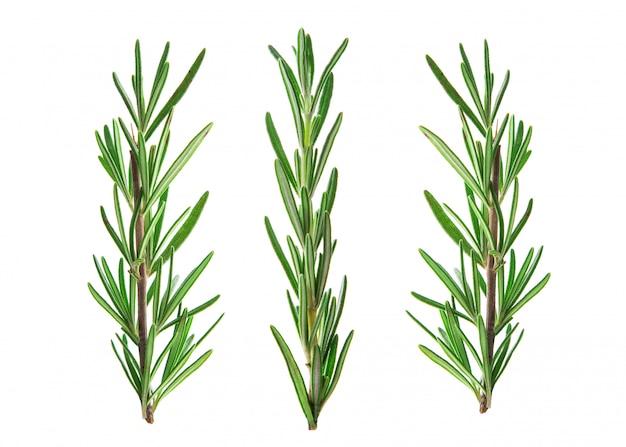 Ramoscello verde fresco di rosmarino isolato su bianco Foto Premium