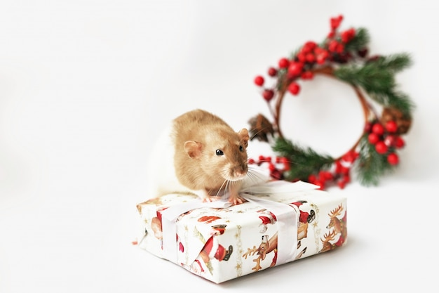 Ratto di natale simbolo del nuovo anno 2020. anno del ratto. capodanno cinese 2020. giocattoli di natale, bokeh. ratto sullo sfondo di decorazioni natalizie. nuovo anno del modello della cartolina d'auguri di natale Foto Premium