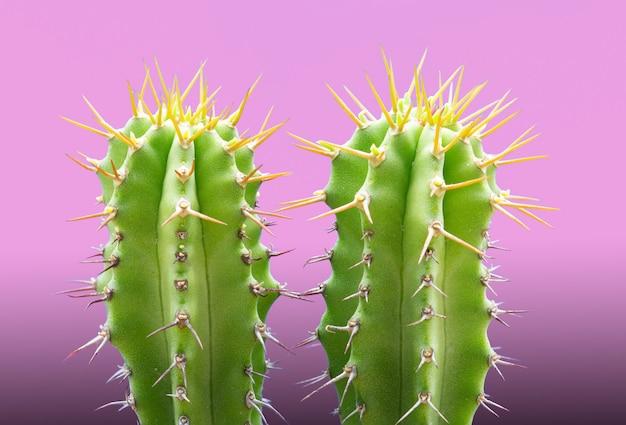 Rendi la pianta tropicale del cactus al neon sul rosa Foto Gratuite