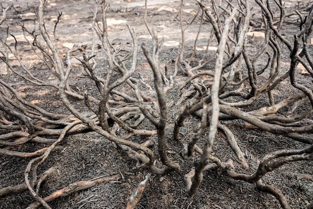 Resti di un incendio boschivo con macchia bruciata. Foto Premium