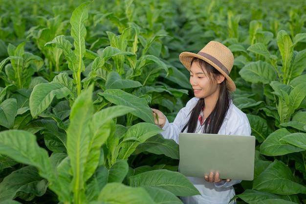 Ricercatrici hanno esaminato le foglie di tabacco Foto Gratuite