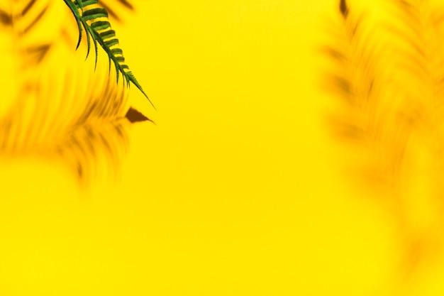 Riflessione dai rami di palma Foto Gratuite