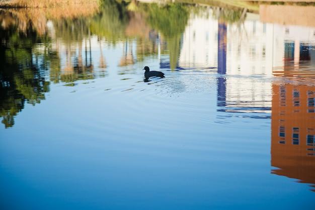 Riflessione di case sull'acqua con anatra Foto Gratuite