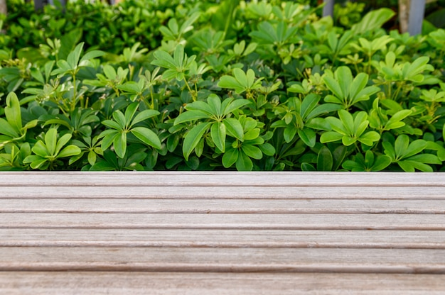 Ripiano del tavolo in legno con pianta verde Foto Premium