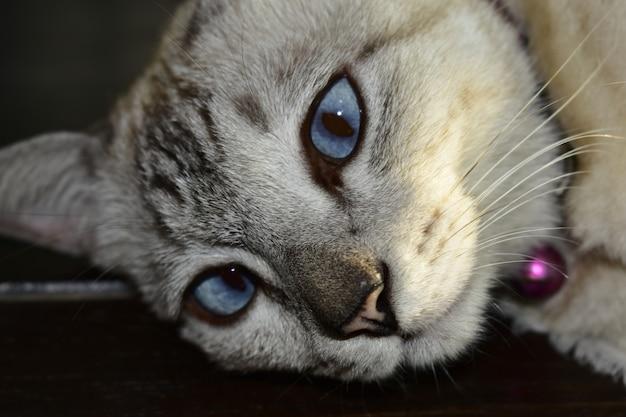 Riposo per gatti sdraiato sul divano, sembra carino Foto Premium
