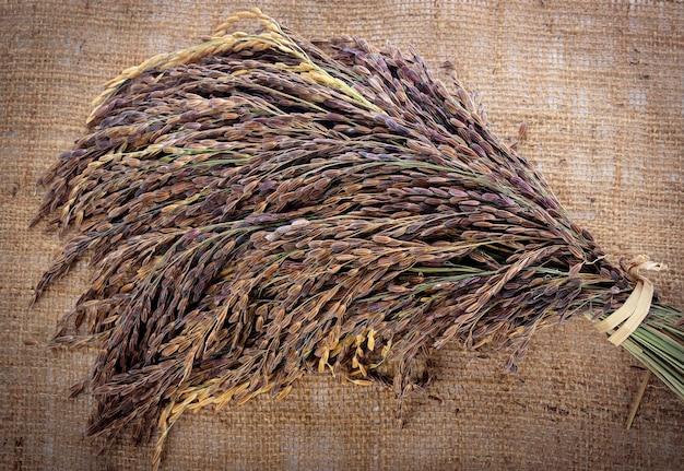 Riso thai red jasmine (bacca di riso) Foto Premium