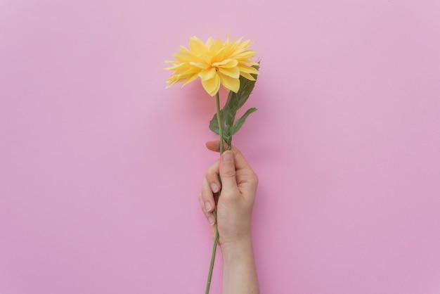 Ritaglia la mano che tiene fiore carino Foto Gratuite