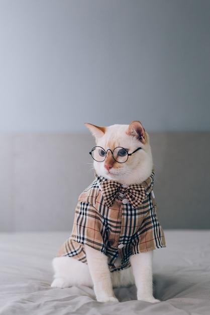 Ritratto dei vetri da portare del gatto bianco, concetto di modo dell'animale domestico. gatto bianco sdraiato sul letto. Foto Premium