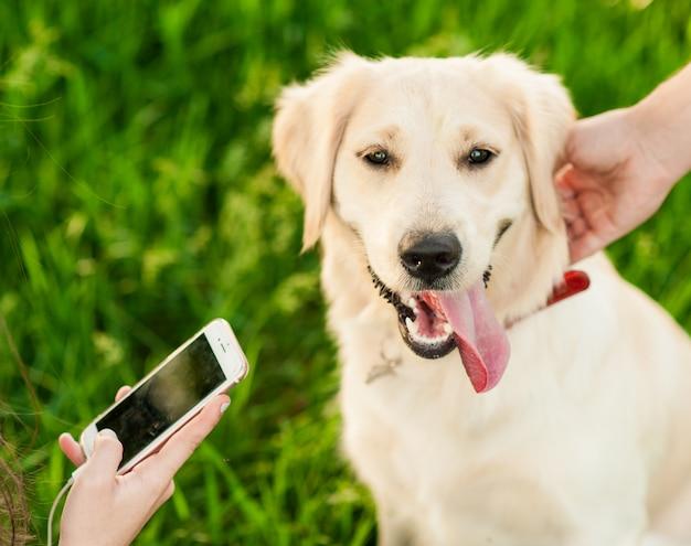Ritratto del cane felice bianco di golden retriever nel fondo di estate Foto Premium