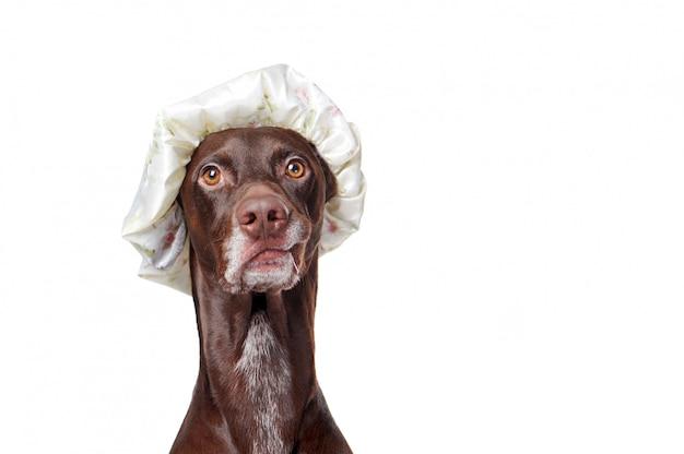 Ritratto del primo piano di un cane del puntatore che porta il cappello di doccia di plastica Foto Premium