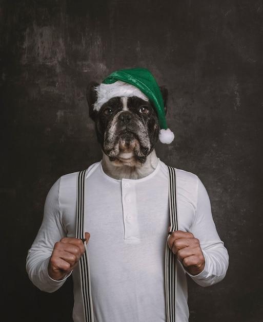 Ritratto della testa del bulldog francese con il cappello verde di natale sul corpo di un uomo con le parentesi graffe Foto Premium