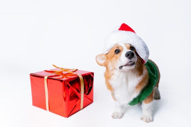 Ritratto di piccolo cucciolo divertente corgi in cappello rosso di babbo natale Foto Premium