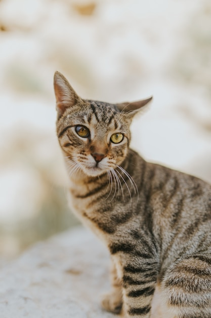 Ritratto di un adorabile adorabile gatto domestico con bellissimi occhi Foto Gratuite