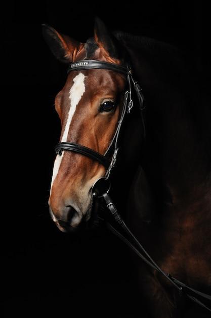 Ritratto di un cavallo baia Foto Premium