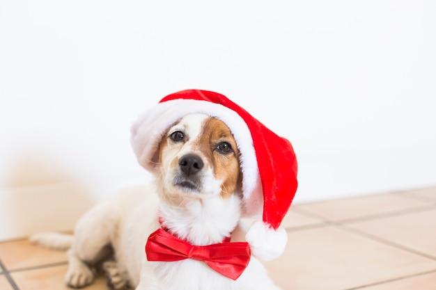 Ritratto di un giovane cane carino che indossa un cappello santa e una cravatta a farfalla rossa. concetto di natale Foto Premium
