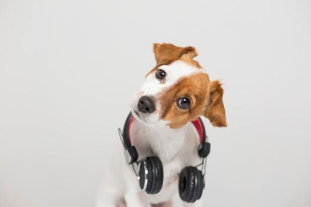 Ritratto di un simpatico cagnolino seduto sul pavimento bianco e utilizzando un auricolare Foto Premium