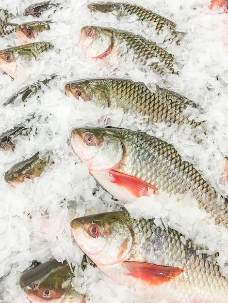 Rohu fresco di pesce Foto Gratuite