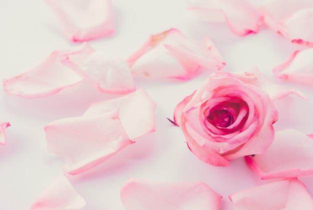 Carta Da Parati Rosa Bianca : Rosa e rosa bianca con petalo scaricare foto gratis