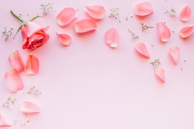 Rosa rosa e petali su sfondo rosa chiaro con spazio nel mezzo Foto Gratuite