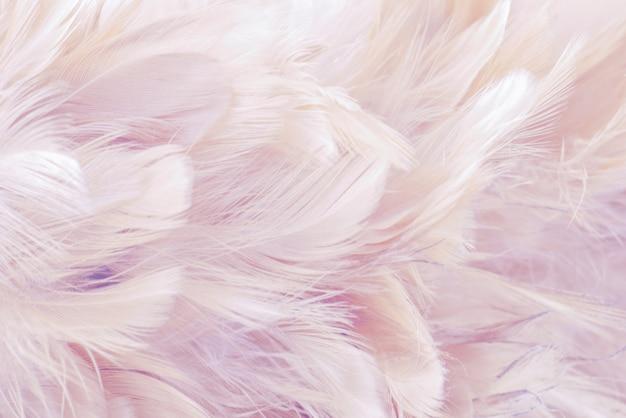 Rosa sfondo astratto uccelli e polli piuma trama Foto Premium
