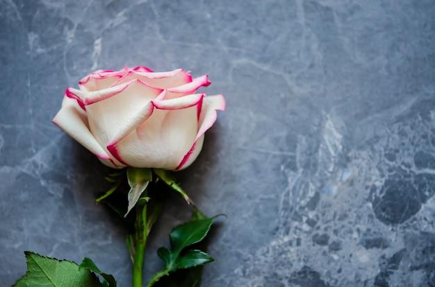 Rosa su sfondo di marmo scuro con posto per il testo. distesi. Foto Premium