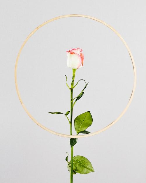 Rose con cornice dorata rotonda Foto Gratuite