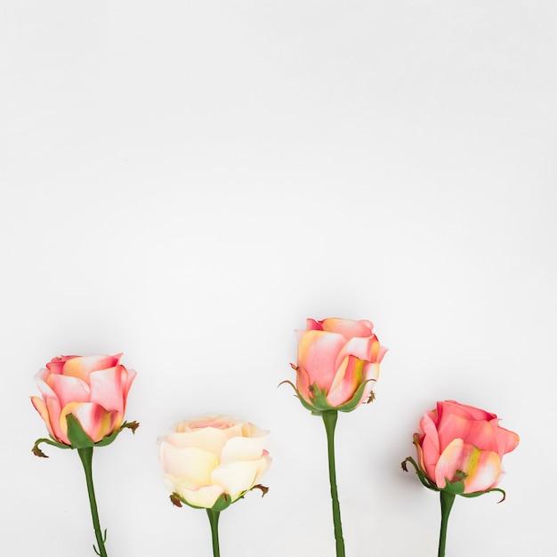 Rose naturali su un bianco con copyspace Foto Gratuite
