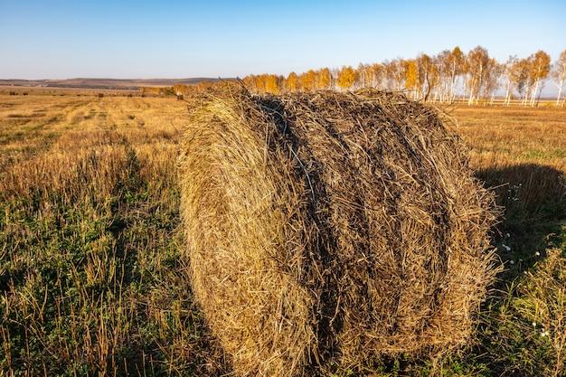 Rotolo di fieno fresco nel campo autunnale, alimentazione del bestiame Foto Premium
