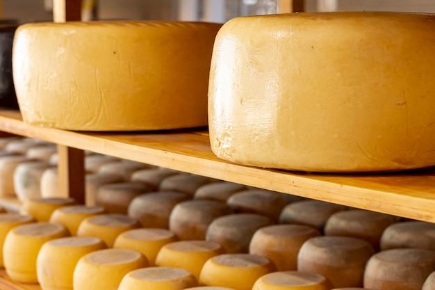 Ruote di formaggio stagionate primo piano Foto Gratuite