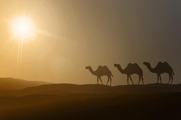 Sagome di cammelli che camminano Foto Premium