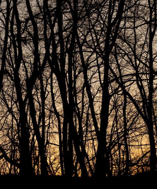 Sagome di foresta di ramo Foto Premium