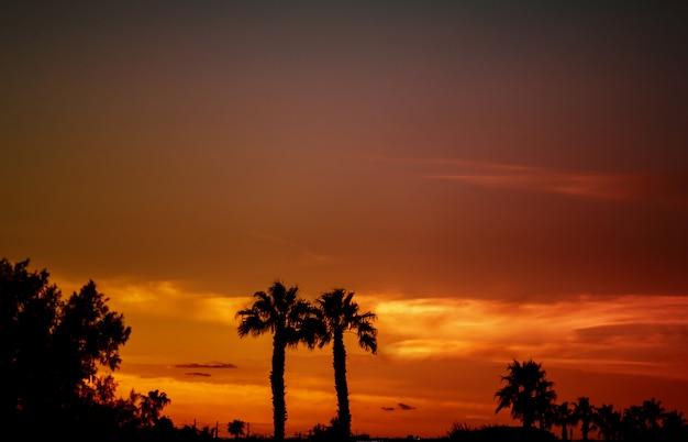 Sagome di palme contro un tramonto tropicale. Foto Premium