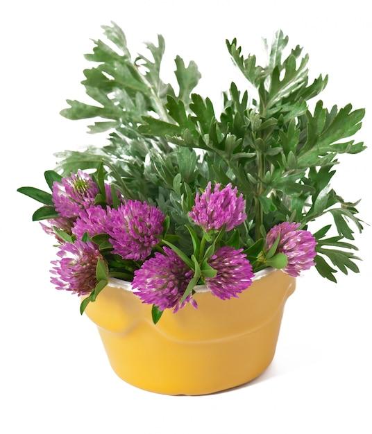 Salvia e trifoglio all'interno del vaso di fiori Foto Gratuite