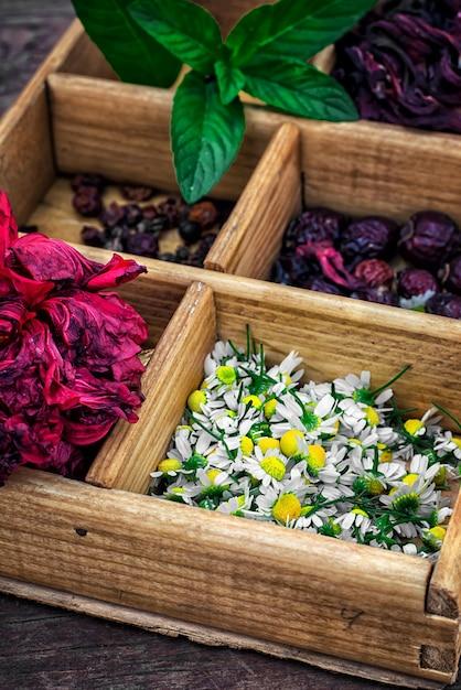 Scatola raccolta nella caduta di erbe medicinali per tè e tè medicinali Foto Premium